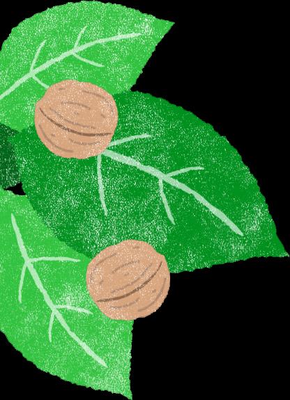 くるみの木左